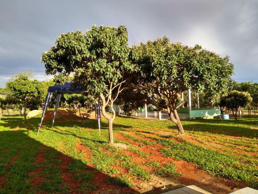 Árvores_Nativas_do_Cerrado